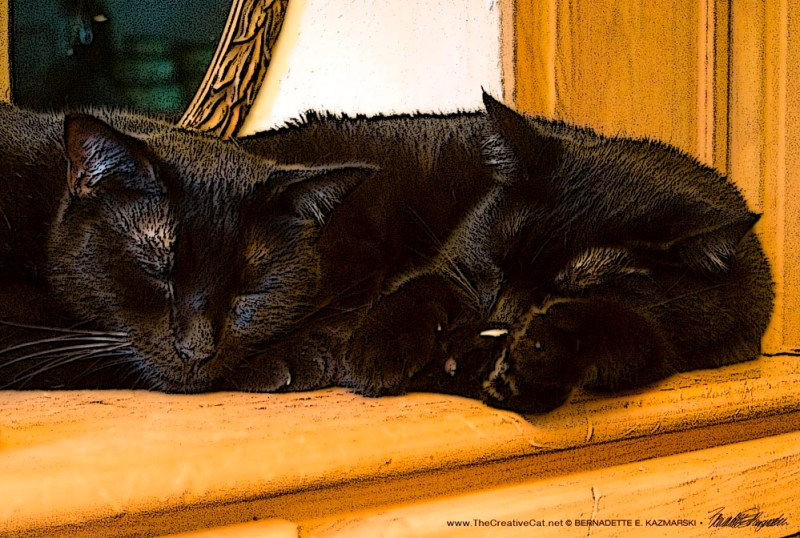 two black cats sleeping
