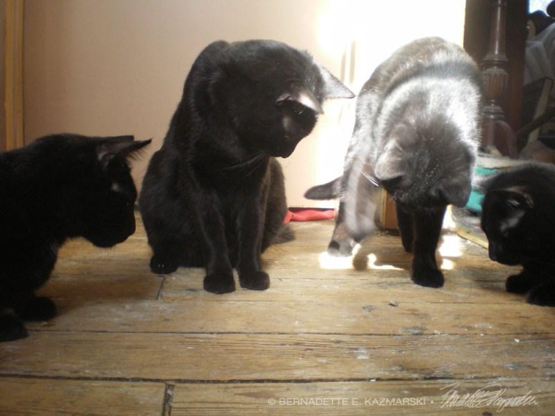 four black cats with stinkbug