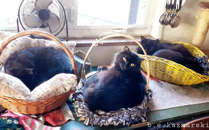 Three cats in baskets.