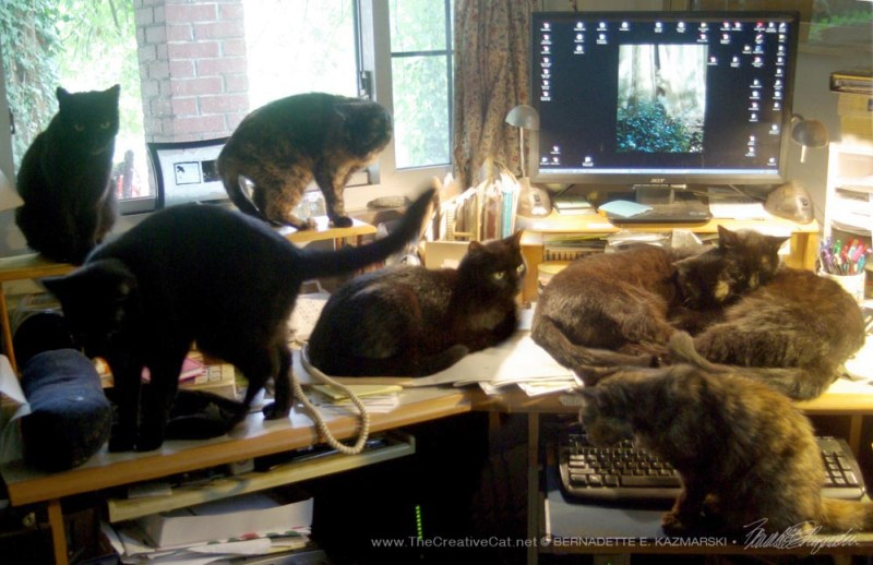 Seven cats on my desk.