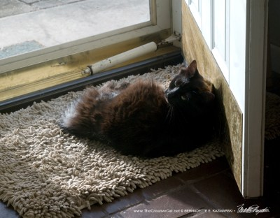 Simon at the door in the morning, enjoying a sunbath.