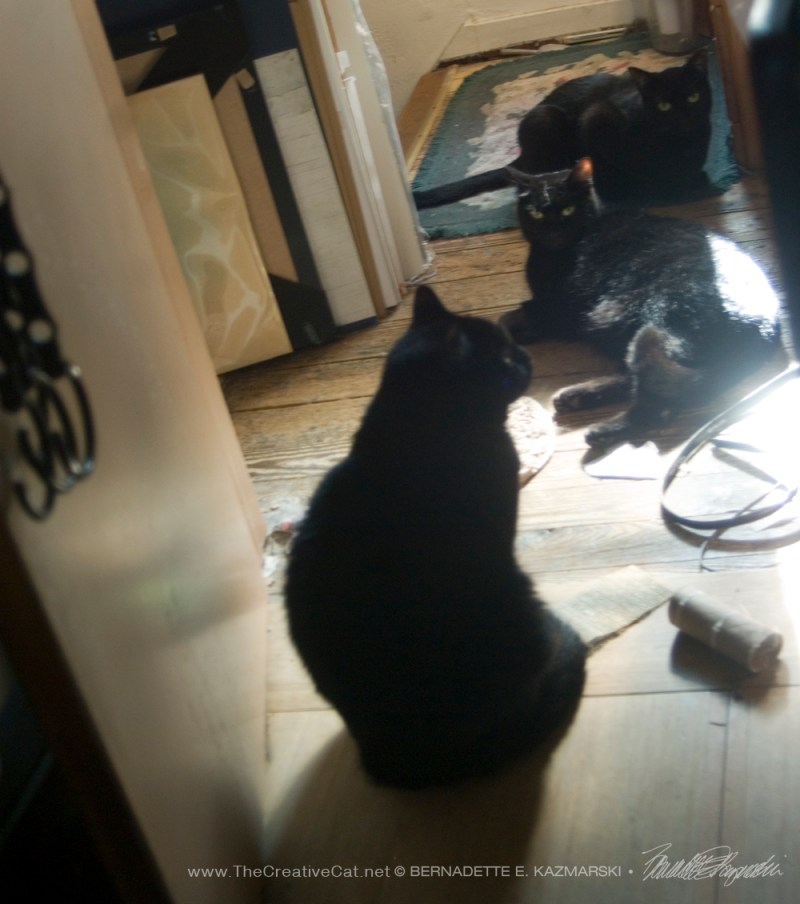 black cats in sunlight