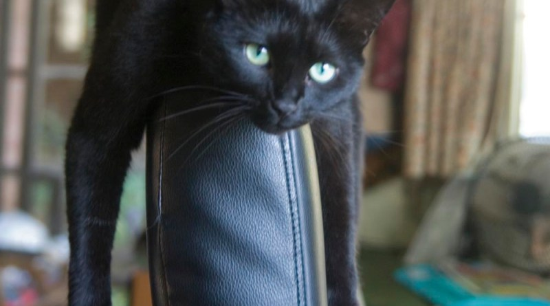 Bella on the chair pretty much immediately.