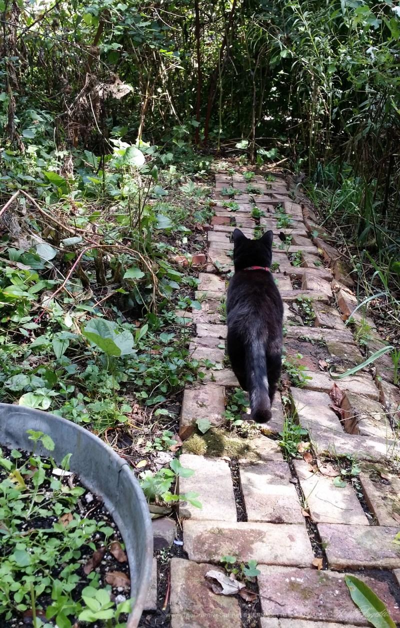 Mimi on that same brick path.