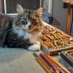 tabby and white cat with pastels
