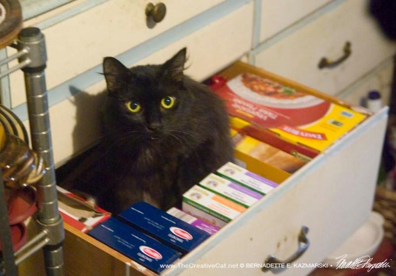 Basil likes the drawer.