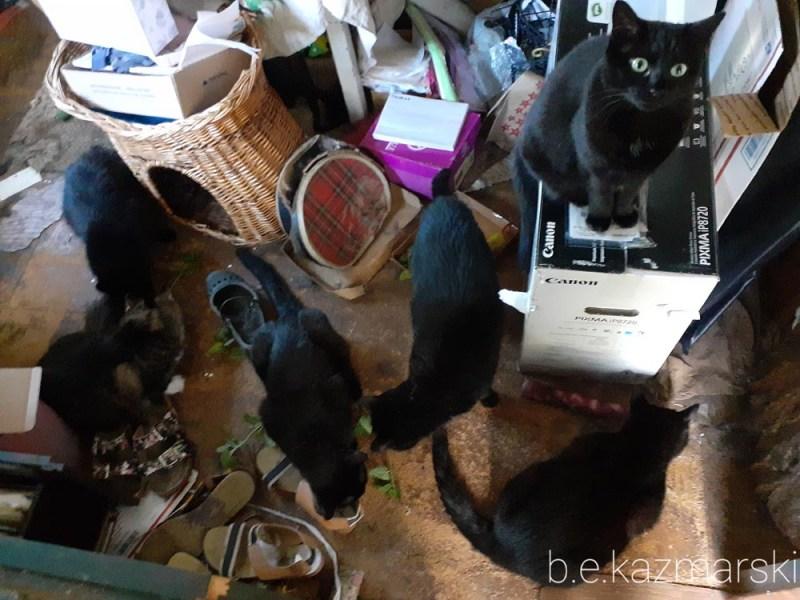 six cats with catnip