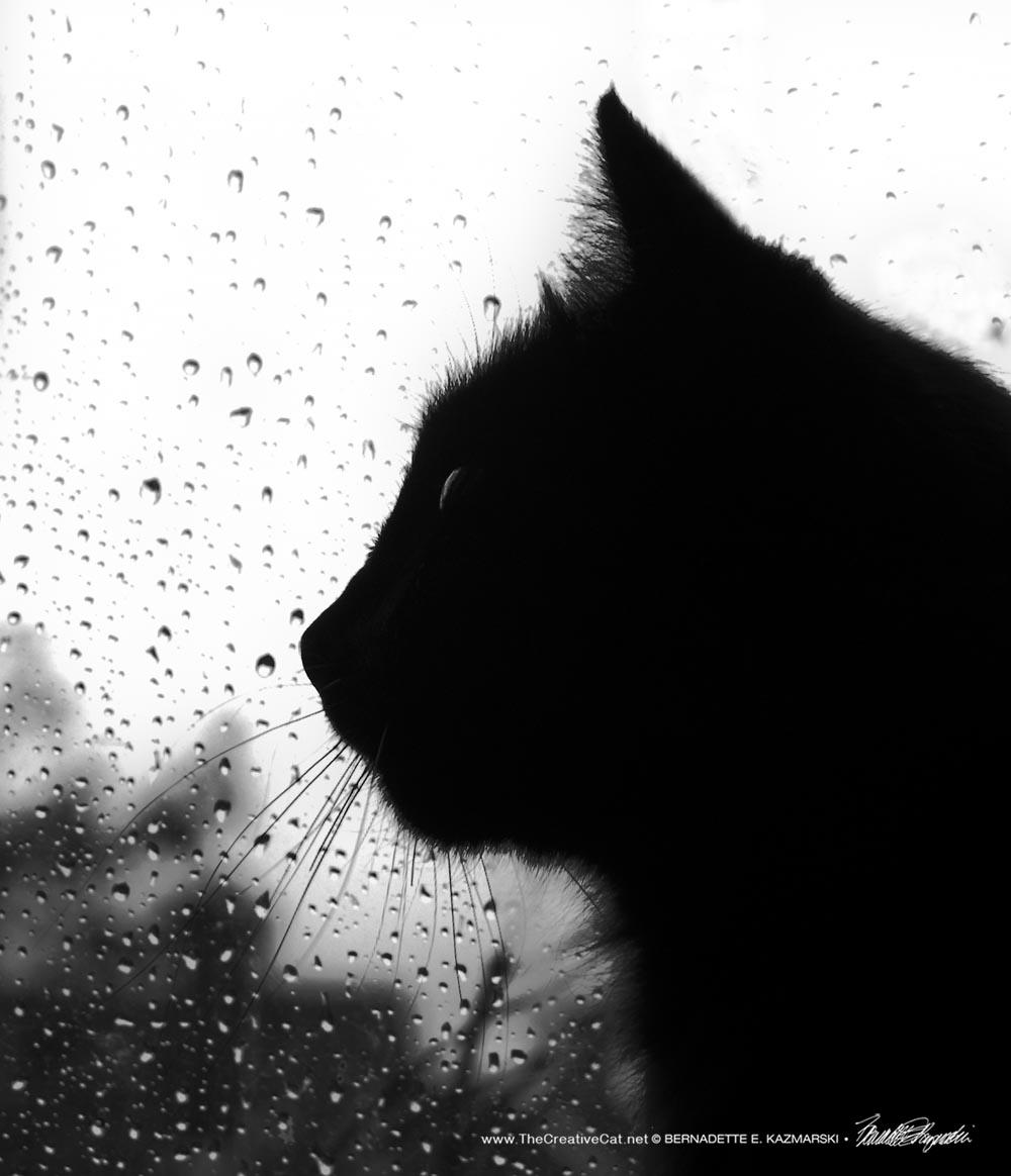 Daily Photo: Rainy Day