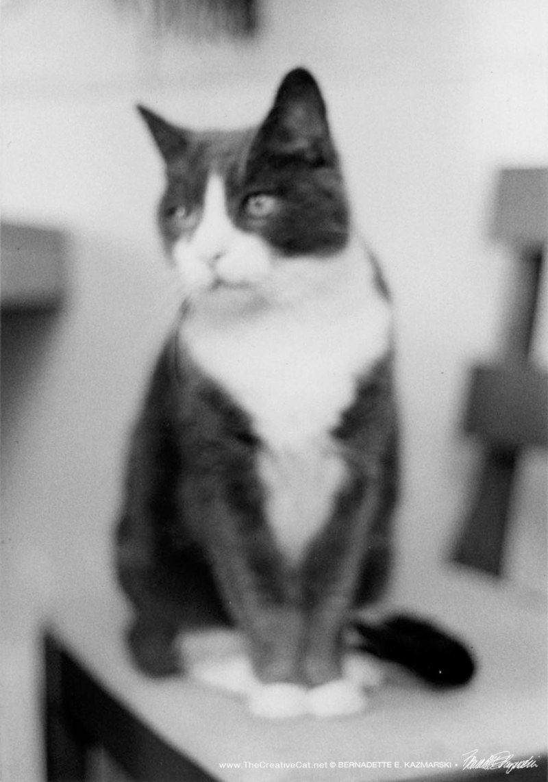 Bootsie looking pretty, but blurry.