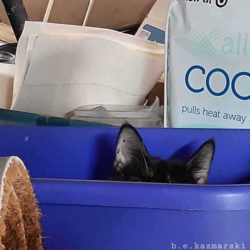 tortie cat in bin