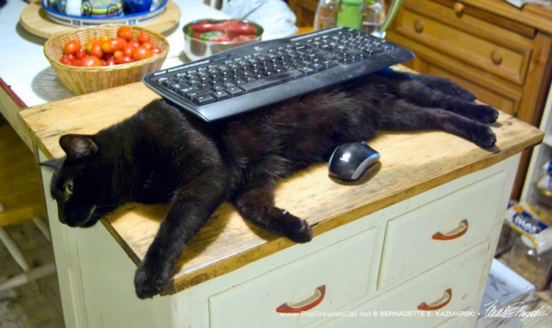 Unicat Keyboard Rest, black cat model.