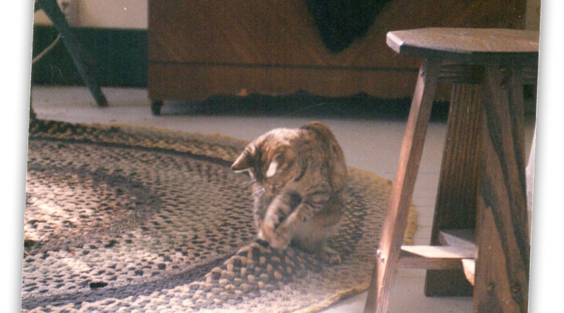 torbie kitten on rug