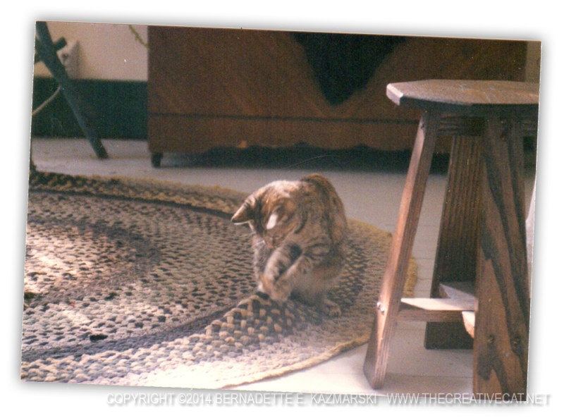 torbie kitten on rug