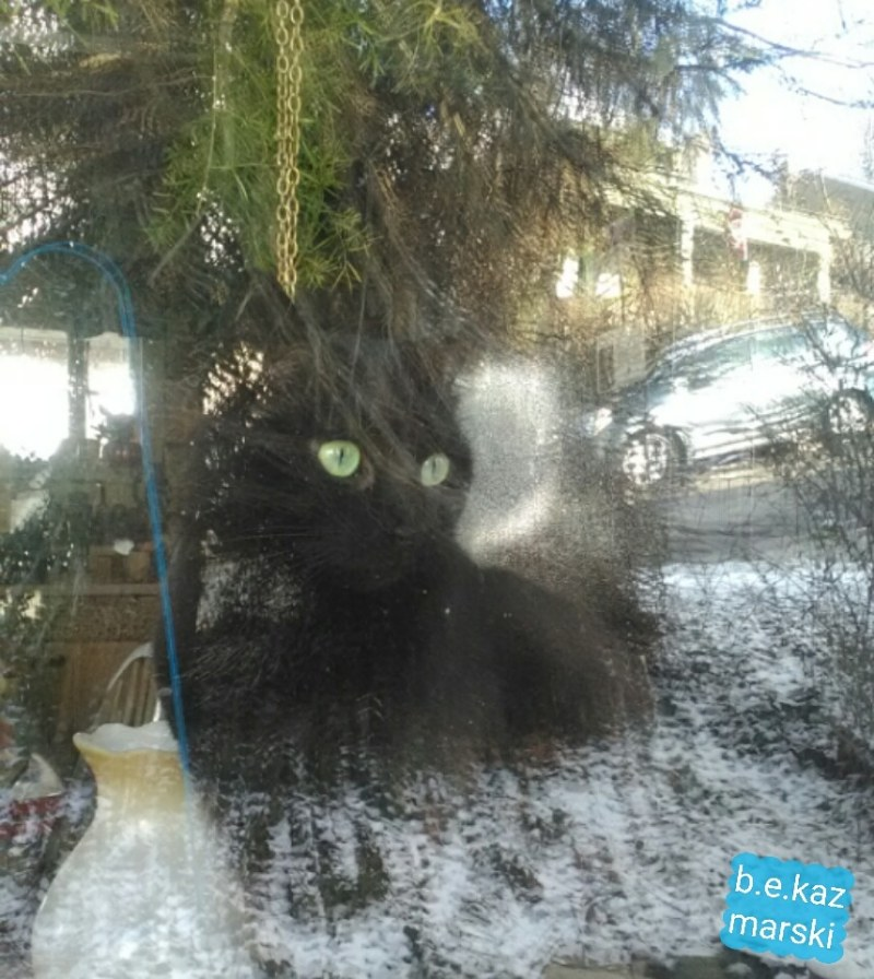 black cat at window