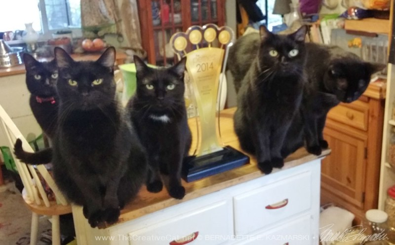 five black cats and petties trophy