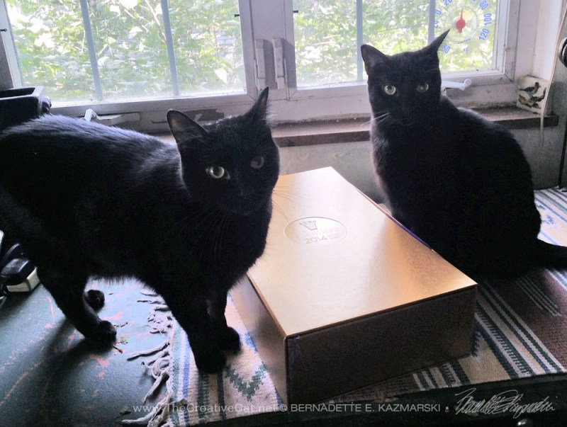 two black cats with gold box