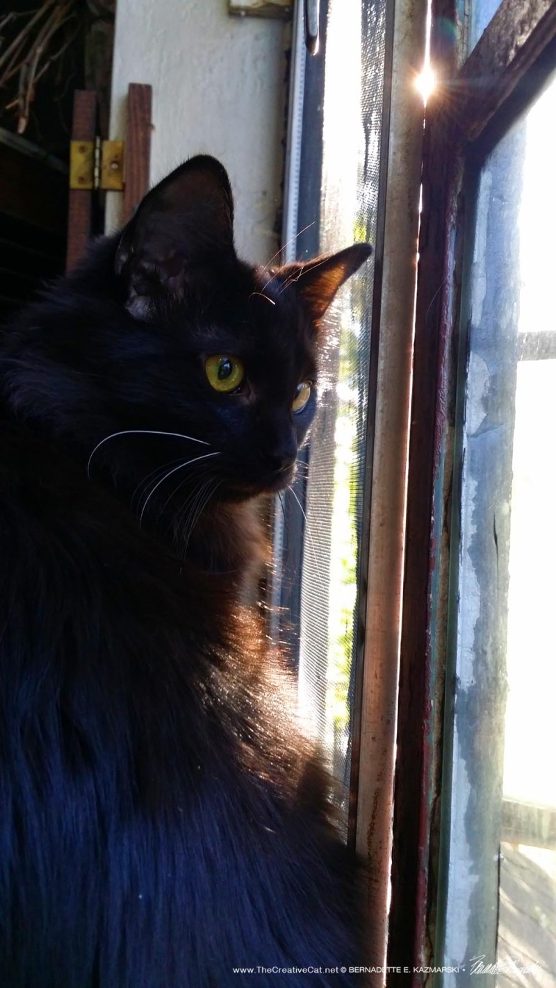 Alvina watching out the window in warm sunlight, one of her favorite things to do.