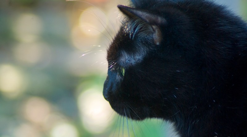 Mewsette's profile with gentle colors of leaves and flowers and sunshine in the background that look like bubbles.