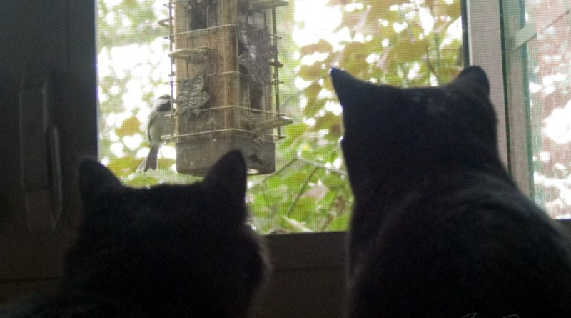 two black kittens watching bird on feeder