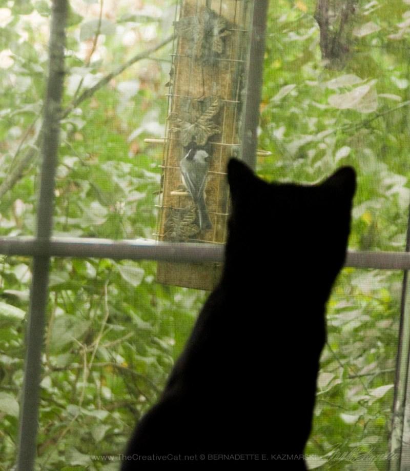 two black kittens watching bird on feeder