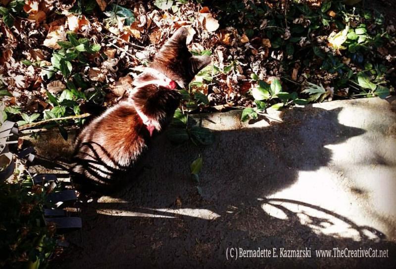 Mimi's Autumn Idyll