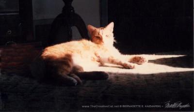 Allegro relaxing in a sunbeam.