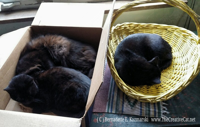 Interesting combinations on a chilly afternoon: Mimi and Basil in the Chewy box, Bella right next door in the yellow basket.