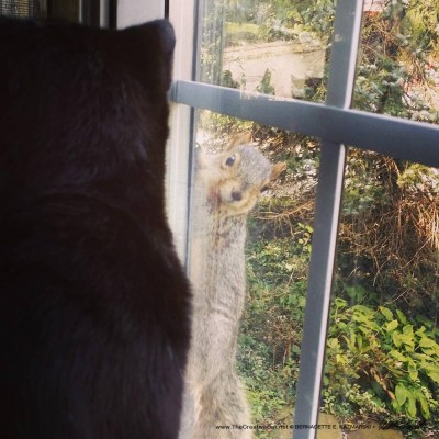 Giuseppe eyes up the squirrel.