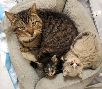 Fred knows how to handle kittens who also need some healing.