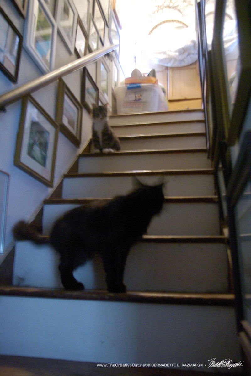 Basil urges Mariposa down the stairs.