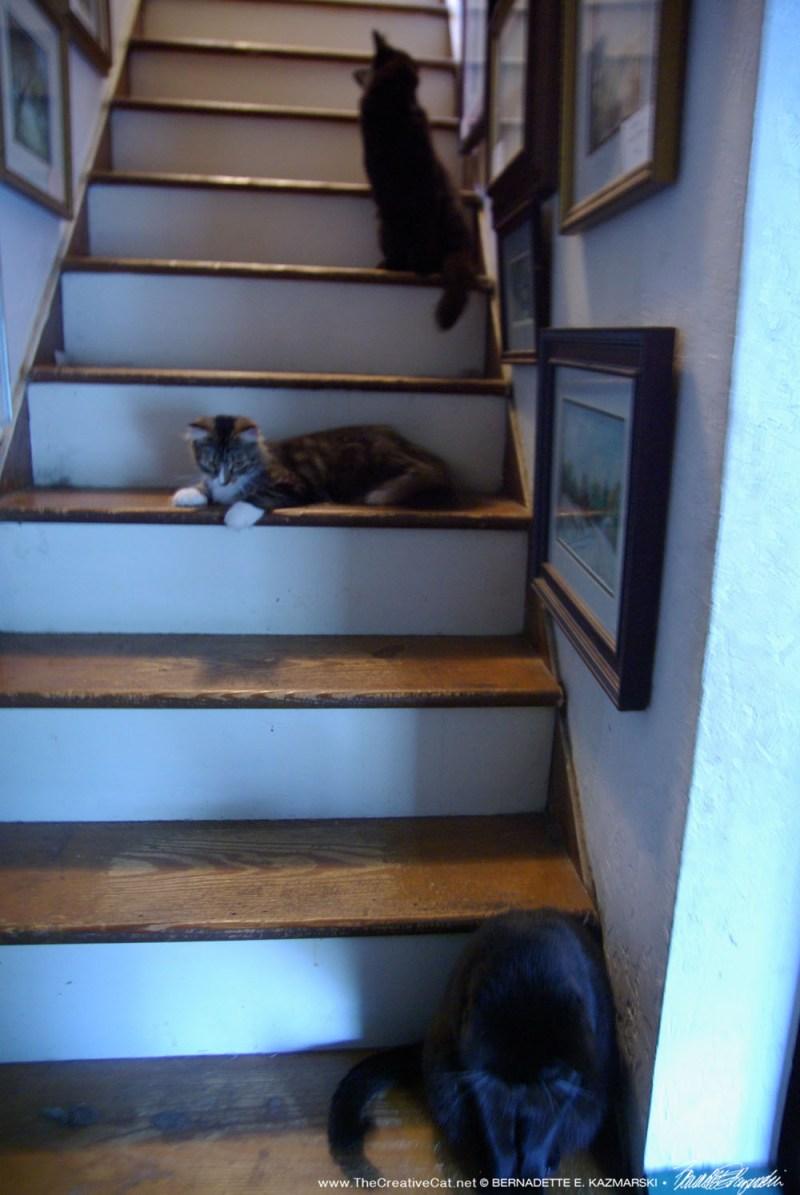 three cats on steps