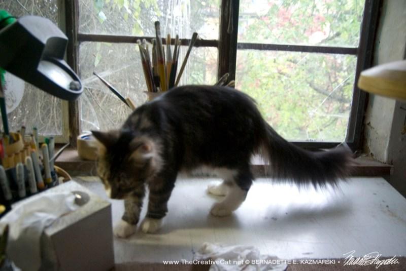 cat on studio table