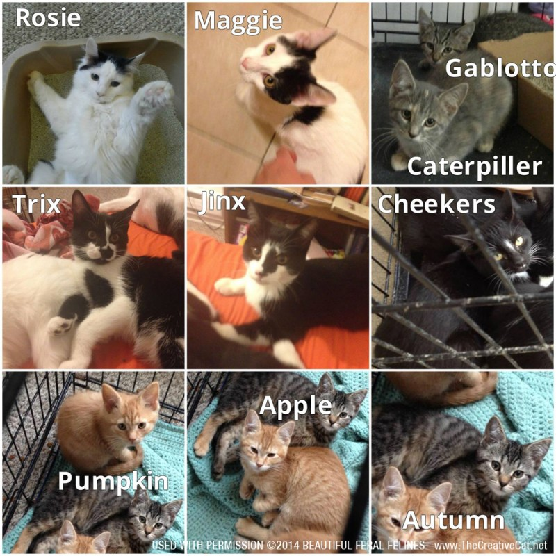 Cats available through Beautiful Feral Felines