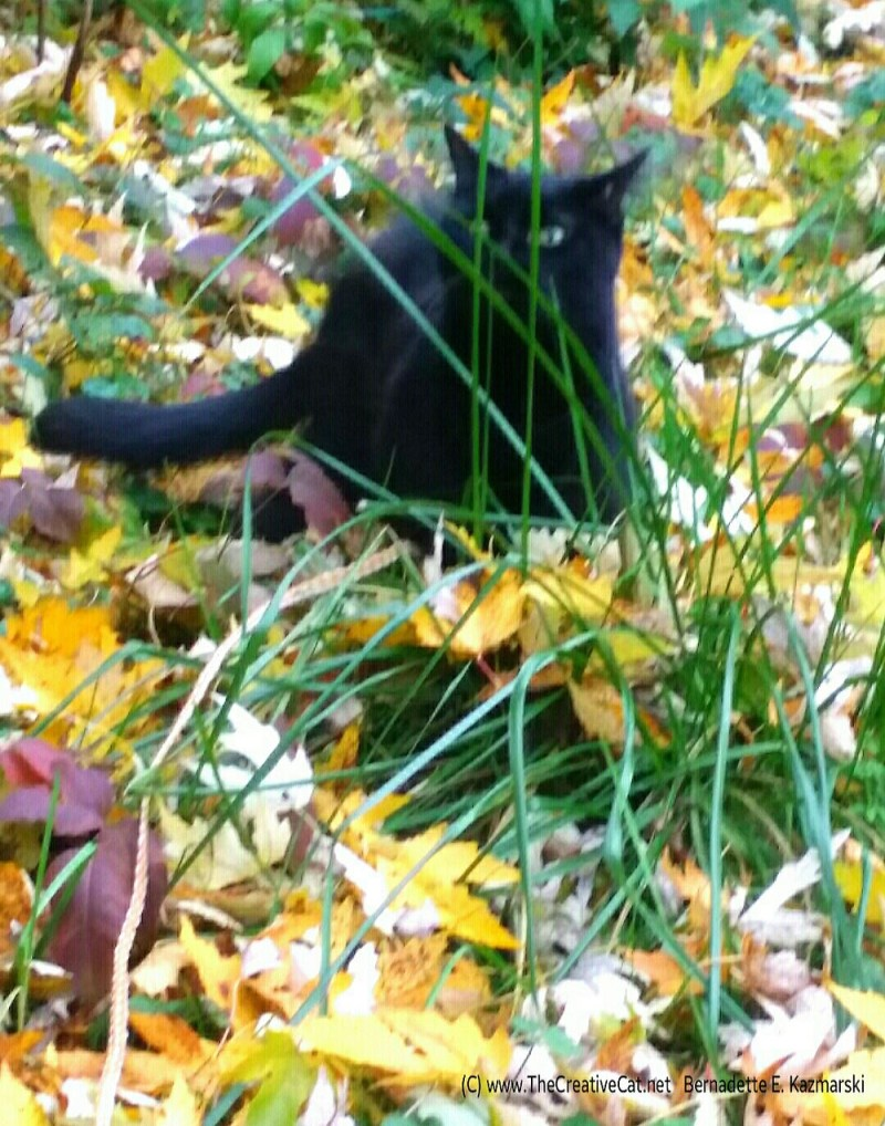 Mewsette chooses a blade of grass.