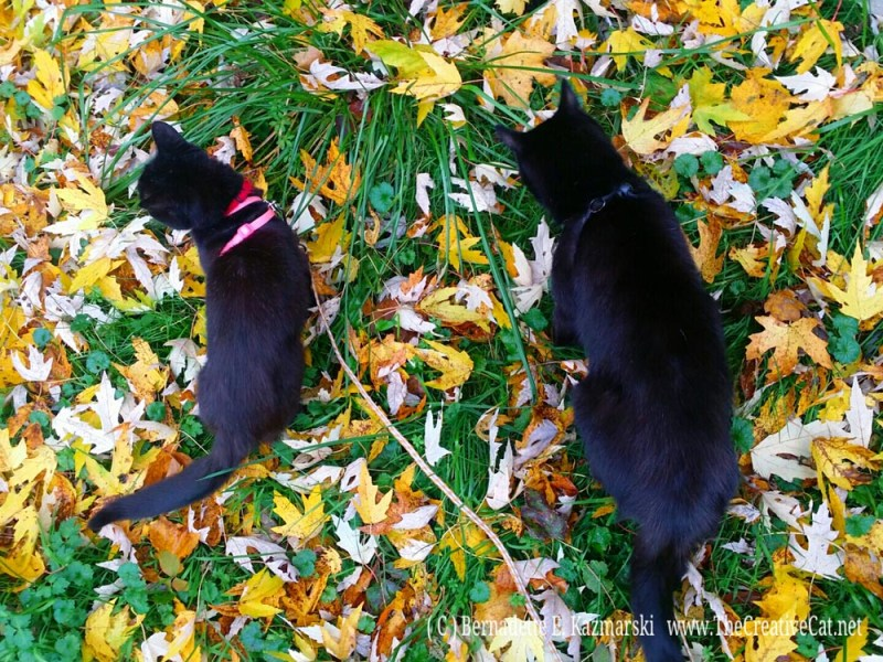 Mimi and Mewsette in the leaves.
