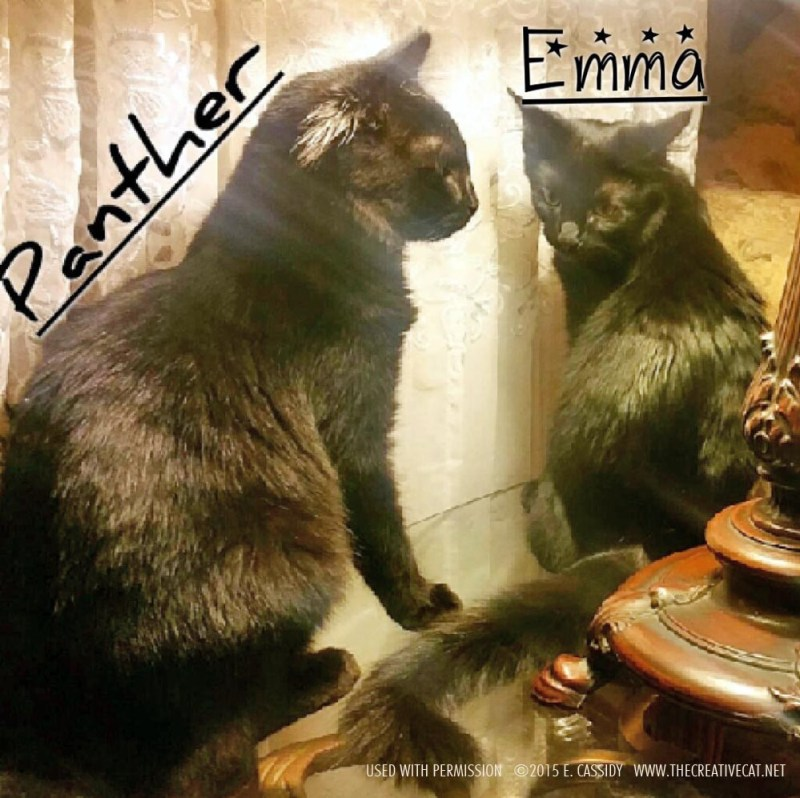 Panther and Emma looking regal under the lamp.