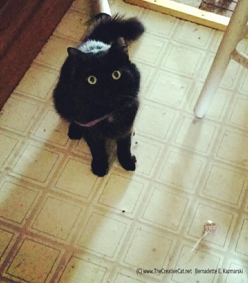 Basil has his lollipop.