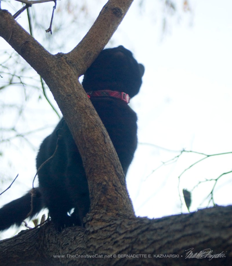 black cat on tree