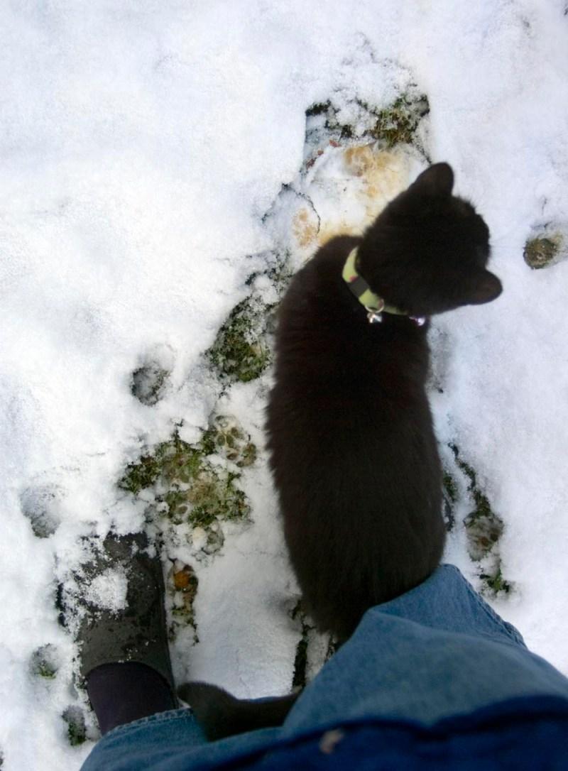 black cat in snow.