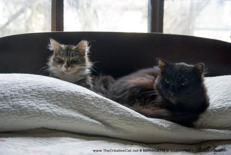 Mariposa and Basil safe and comfy.