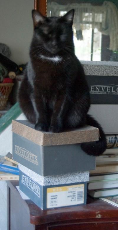 black cat on boxes