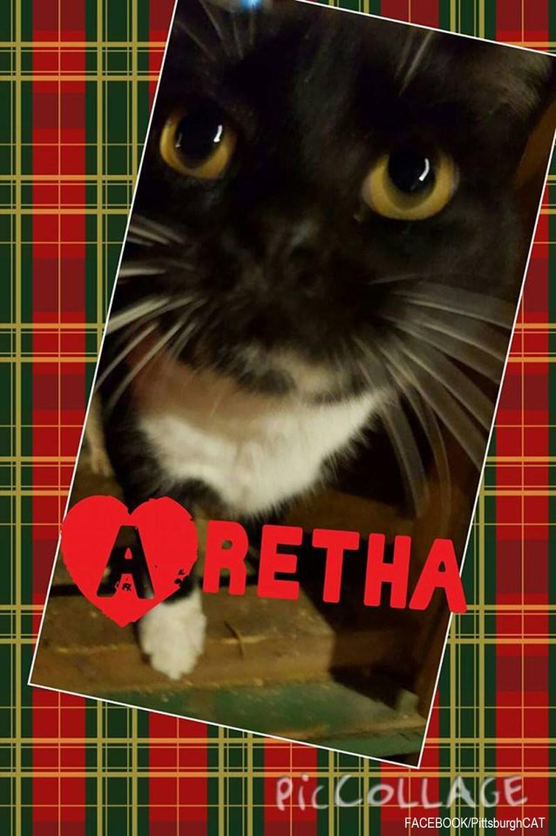 111615-Aretha