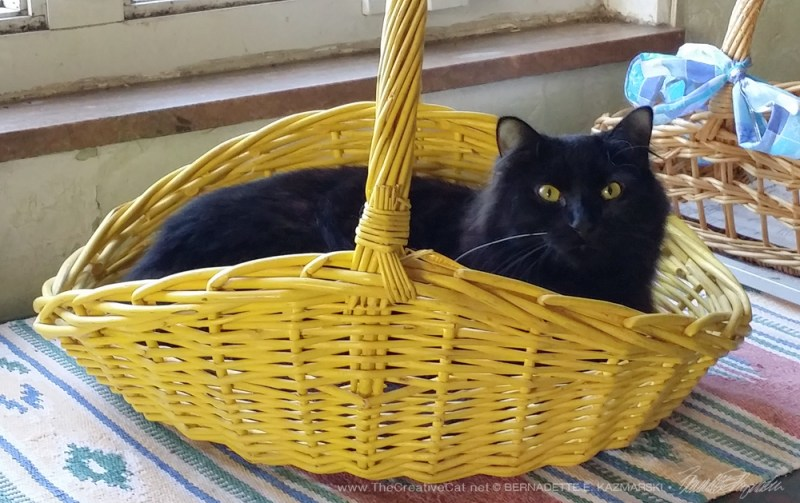 Classic cat in basket.