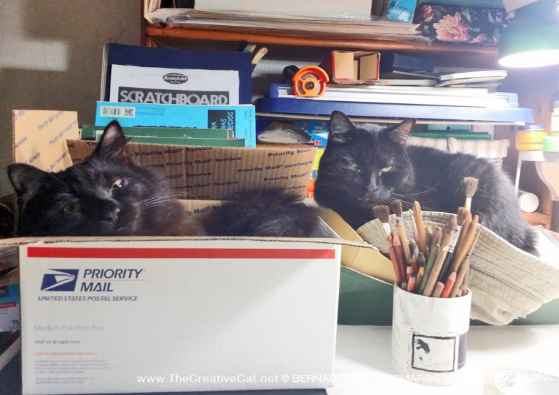 two black cats in boxes