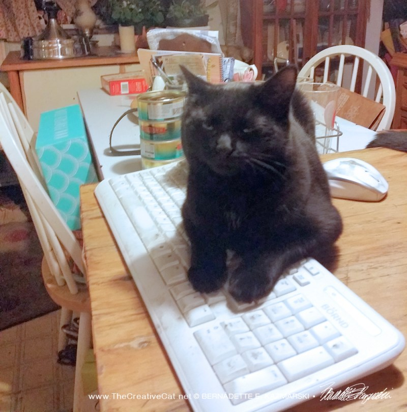 black cat on keyboard