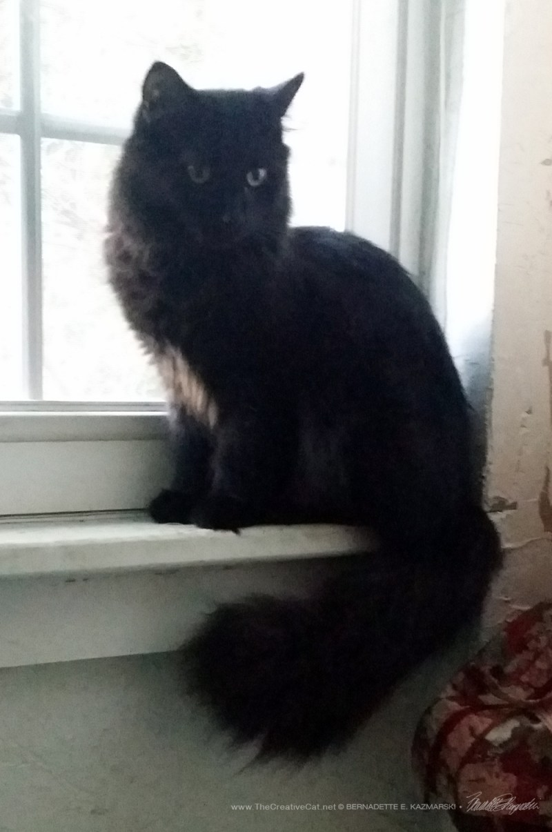 Hamlet on the windowsill shows off his tail.