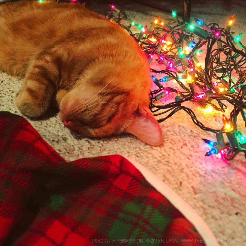 Finn has a nap with the lights.
