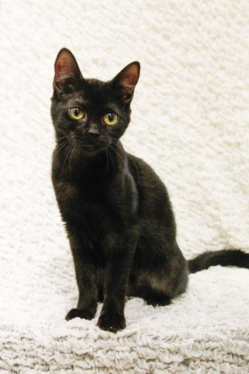 young black kitten