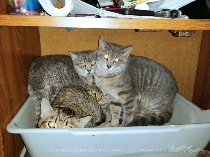 four tabby kittens