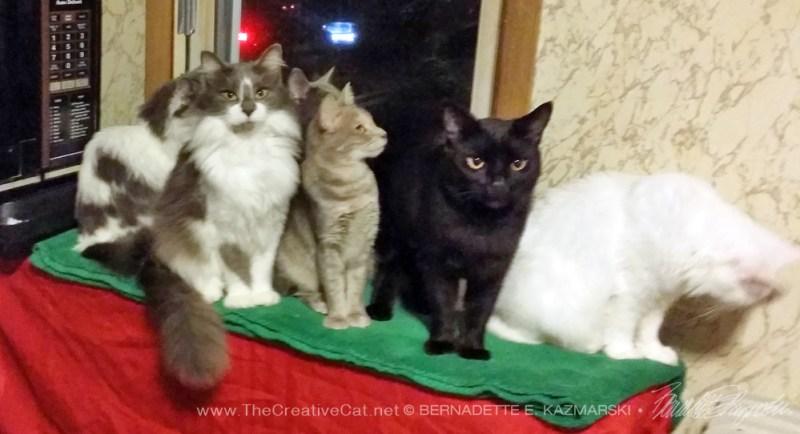 Six of Mindy's cats.